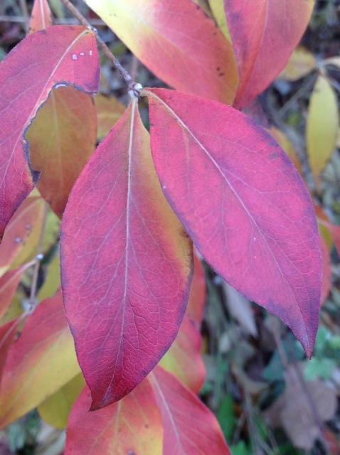 Fall colour 13.jpg