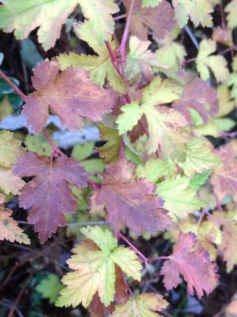 Fall colour 17.jpg