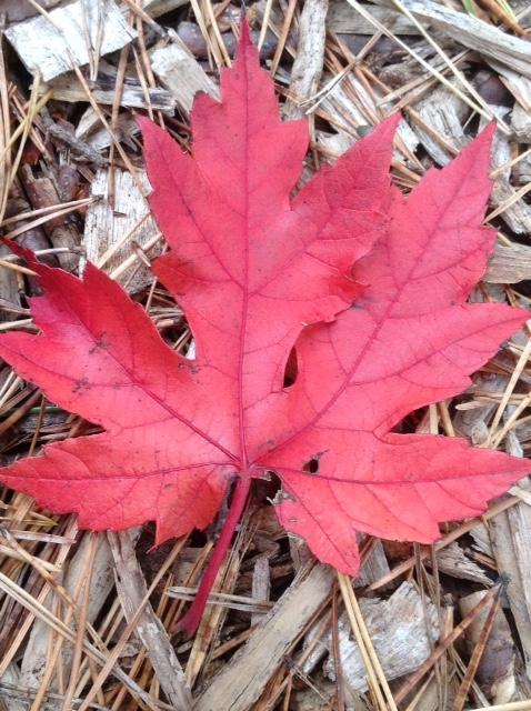 Fall colour 19.jpg