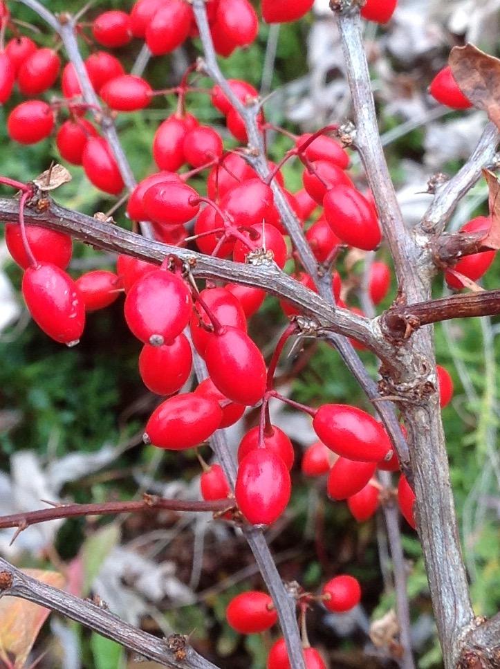 Fall colour 18.jpg
