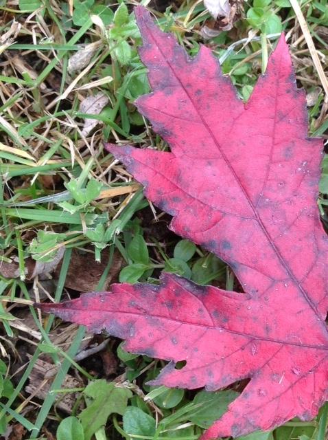 Fall colour 21.jpg