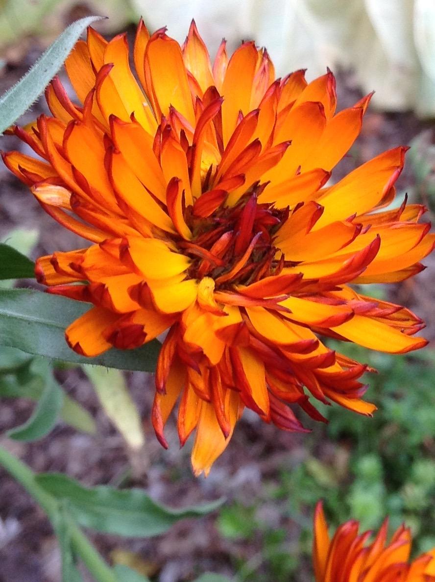 Fall colour 22.jpg