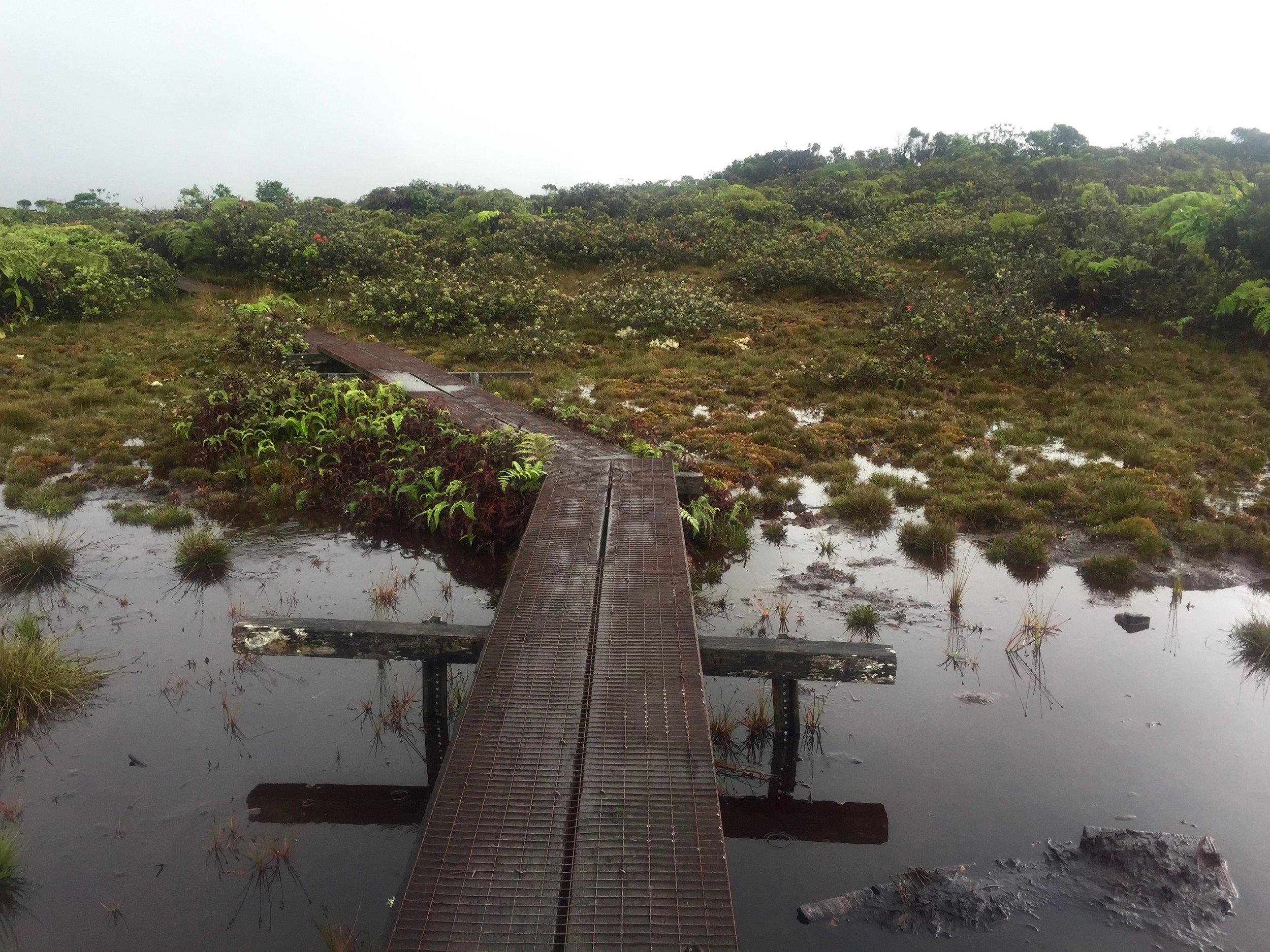 Boardwalk through the Alakai Swamp.