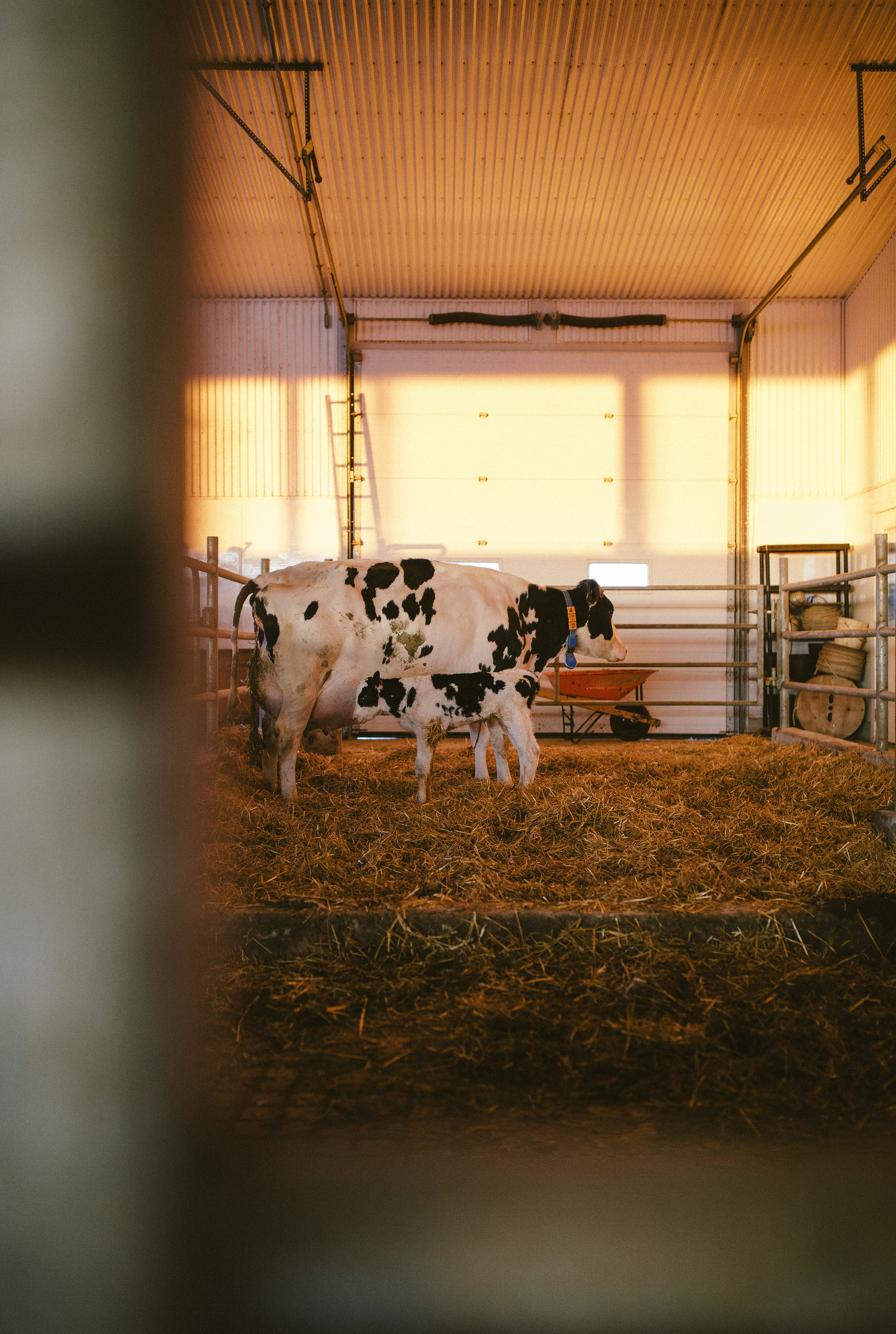 Farm0418-091.jpg