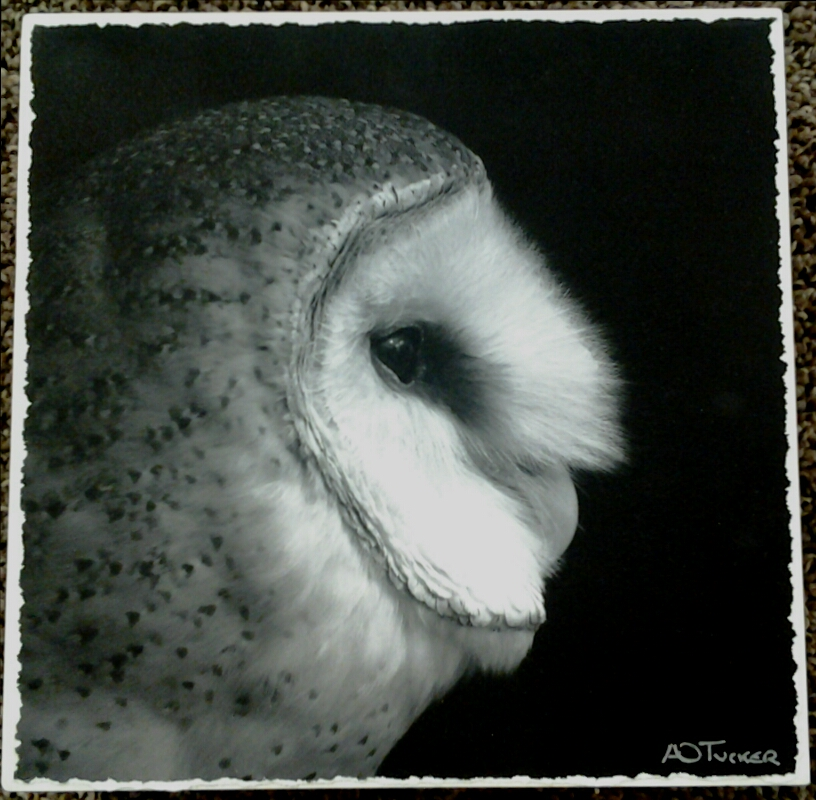 """Ghost Owl Portrait"" original photograph museum box by A O Tucker - $125 (8"" x 8"")"