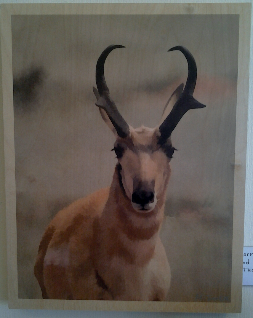 """Pronghorn"" original photo on wood by A O Tucker - $155 (11"" x 14"")"