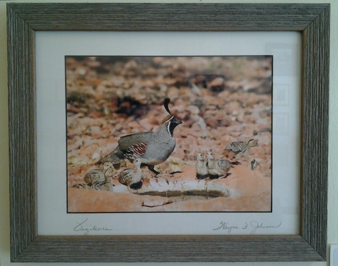 """Vigilence"" original photograph by Wayne Johnson - $85 (16"" x 13"") - SOLD"