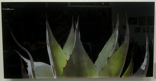 """Agave"" original photo on acrylic by A O Tucker - $295 (17.5"" x 9"")"