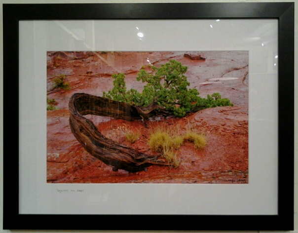 """Against All Odds"" original photograph by Wayne Johnson - $295 (26"" x 20"")"