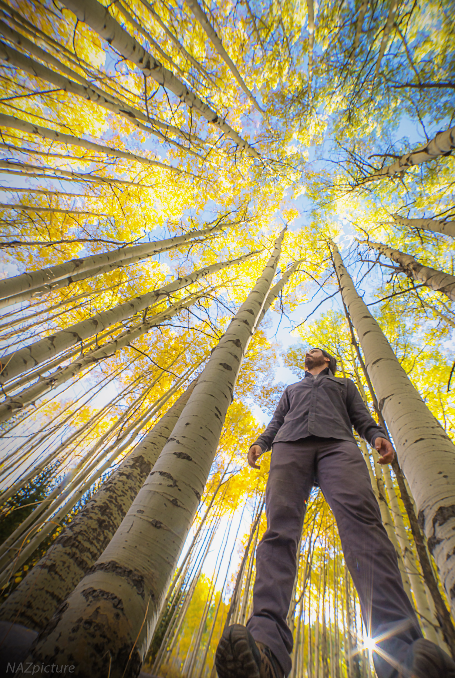 Tall and mighty. An aspen grove during peak fall color atop Kebler Pass, Colorado.