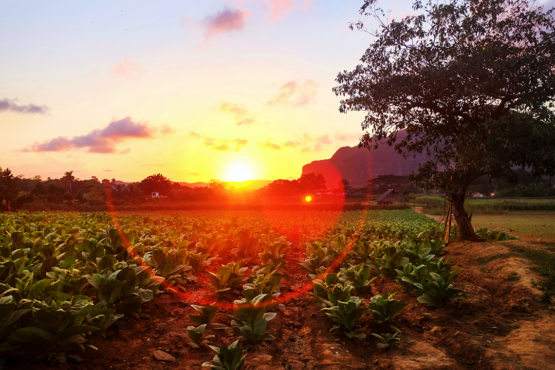A favorite moment: the sun setting in Viñales