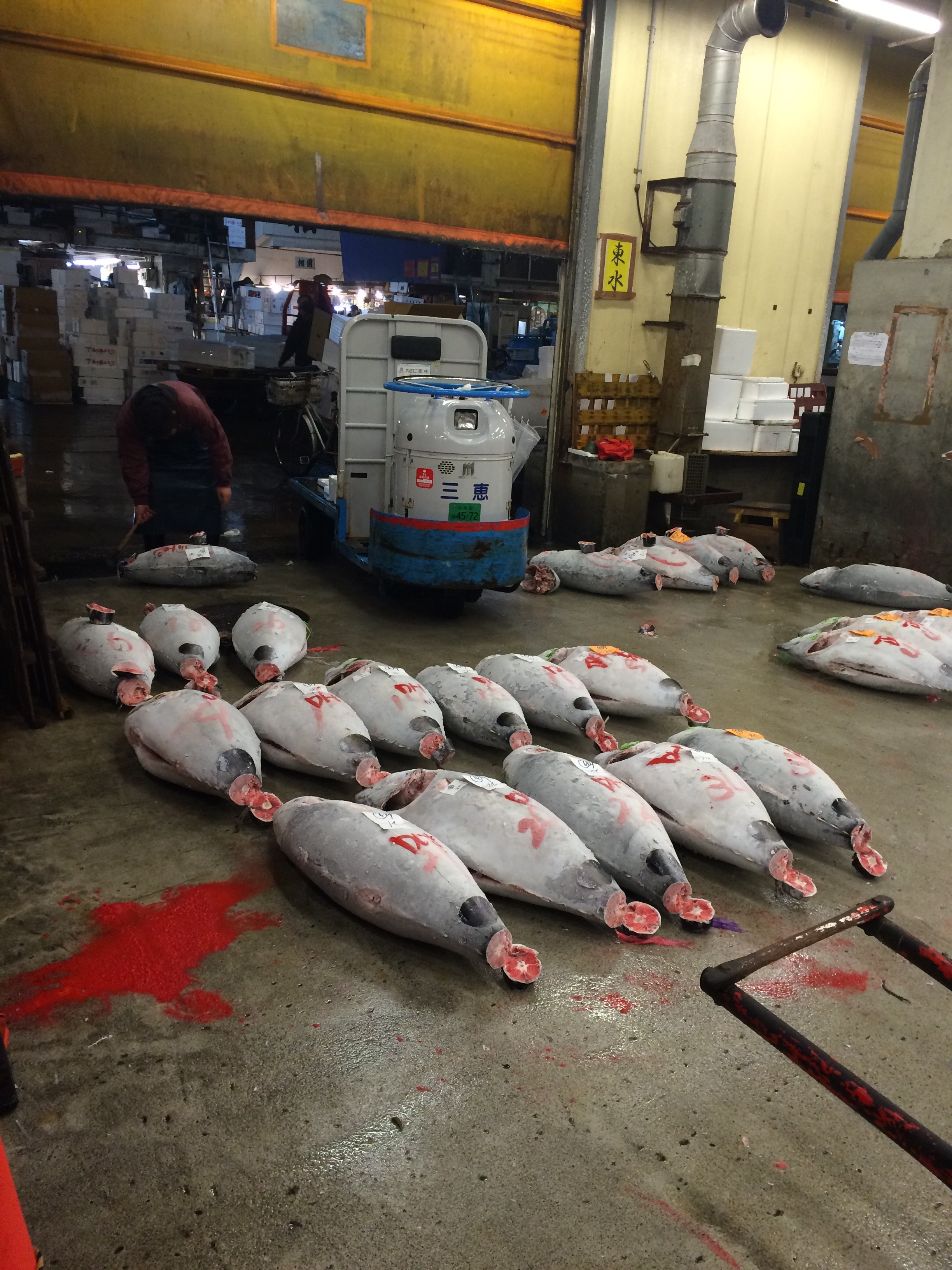 Tsusiki tuna auction (don't worry, those bright red blotches are not blood)