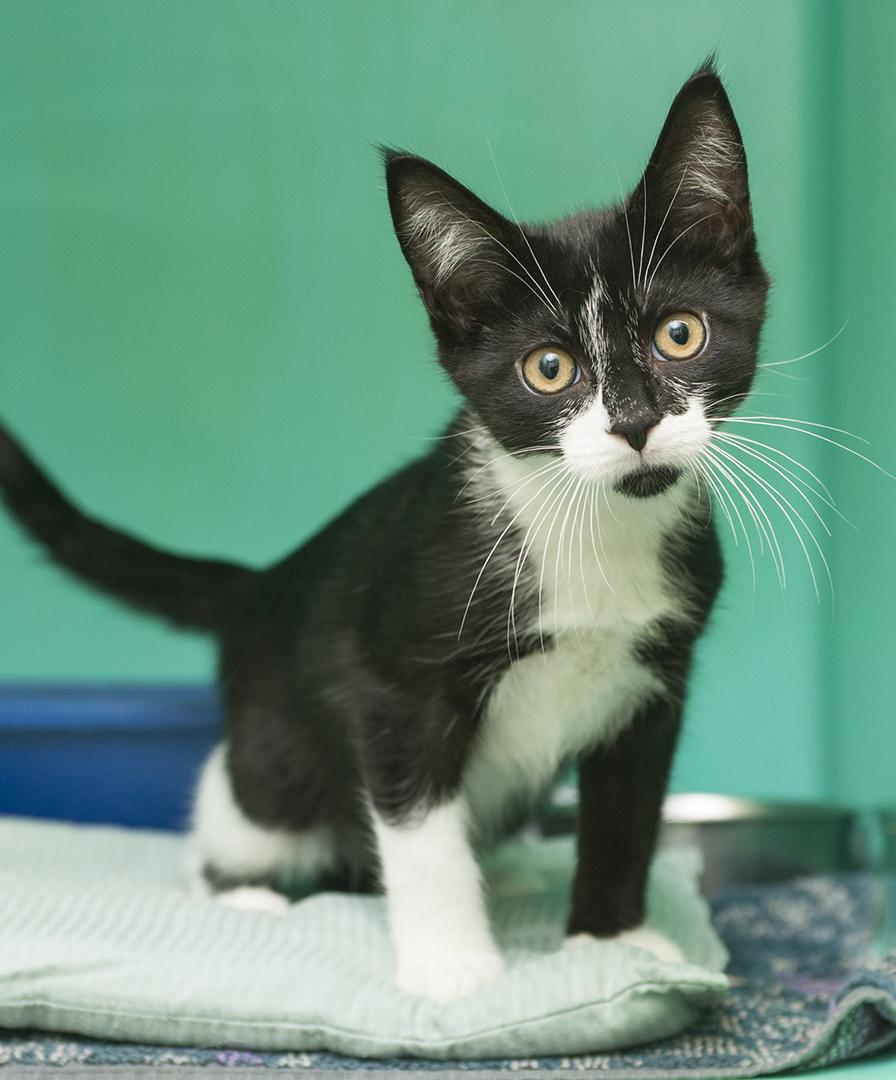 tux kitten_1.jpg