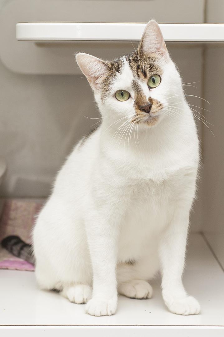 Cat1_1.jpg
