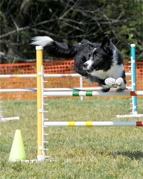 bc jump.jpg