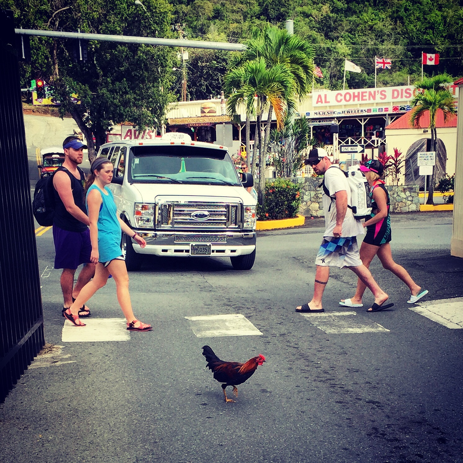 Chicken crosses the road.