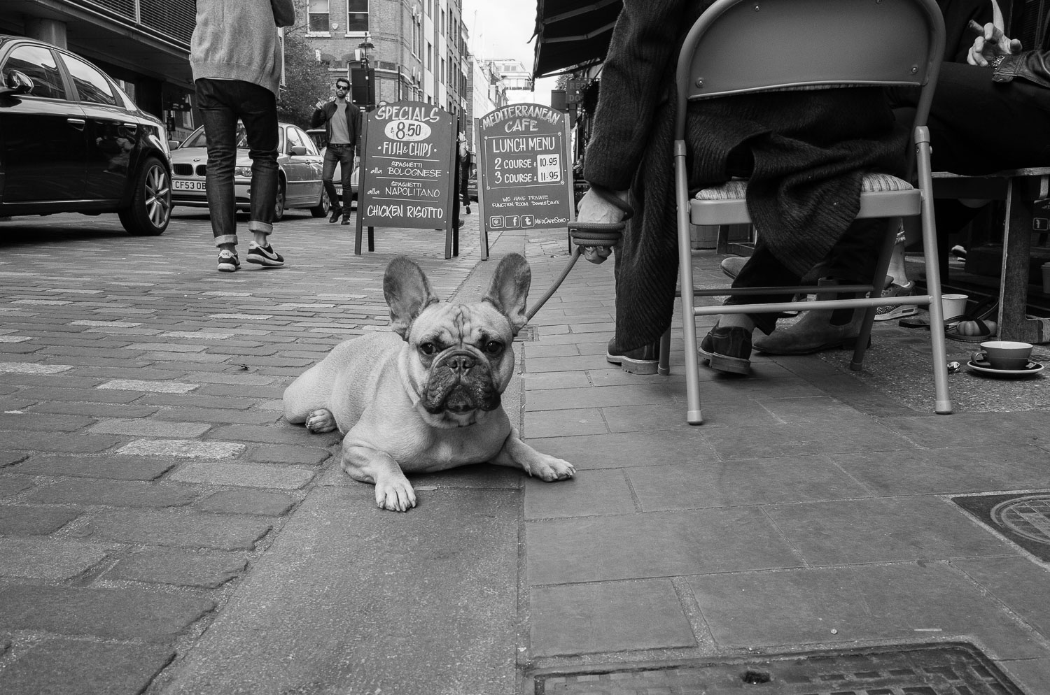 A French Bulldog in Soho