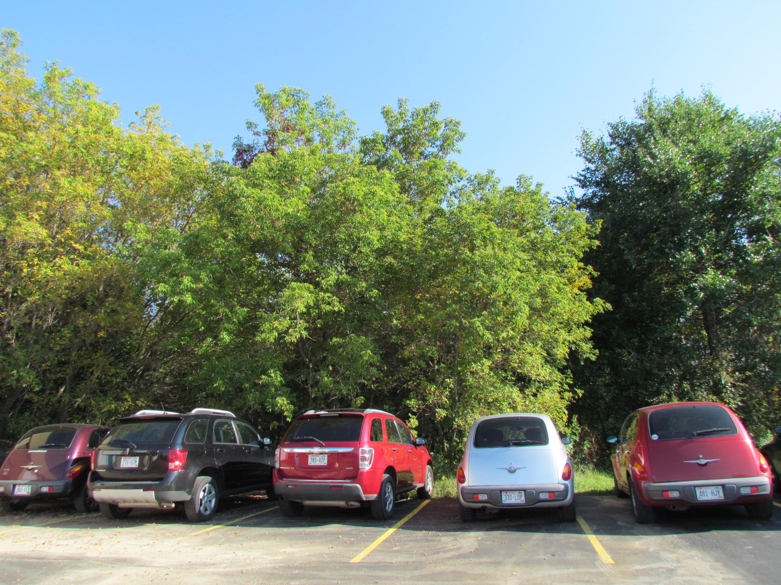 loaner cars