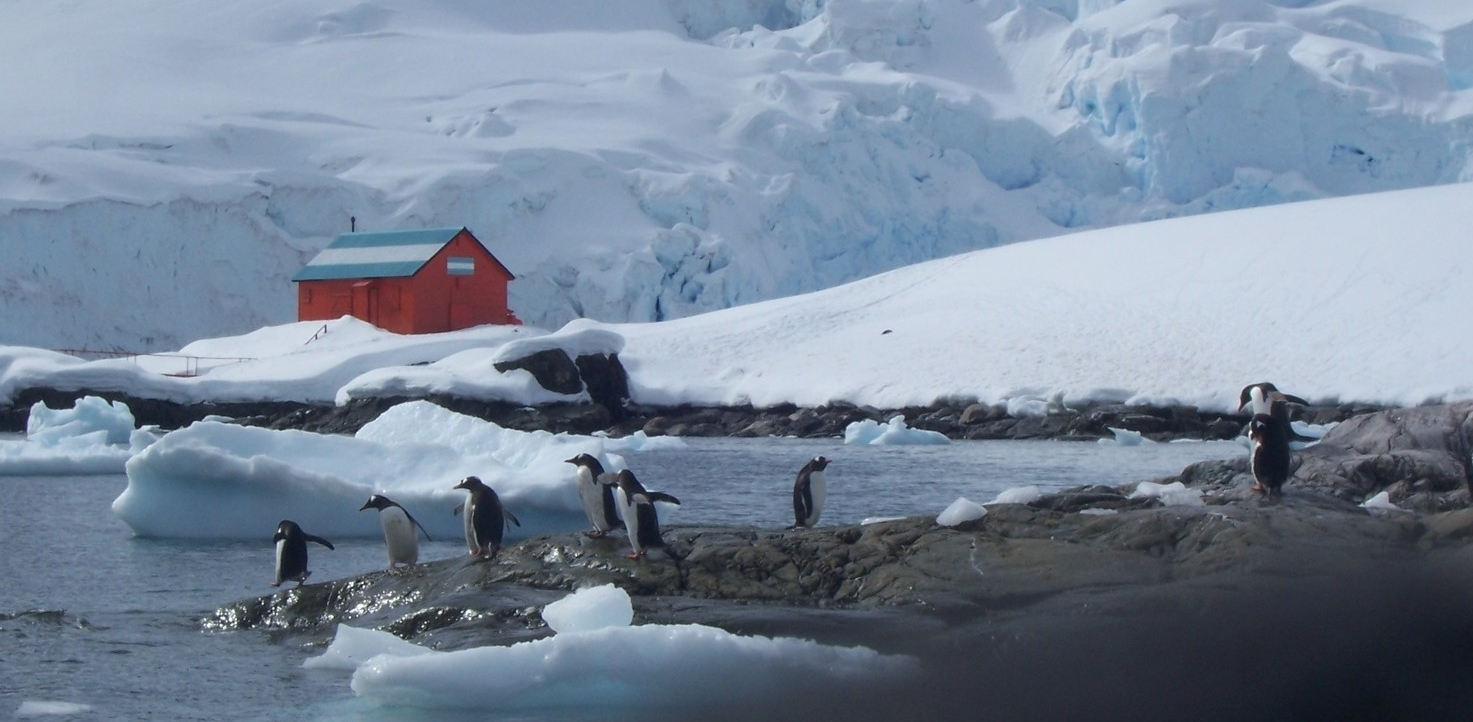 Antarctic penguin.JPG