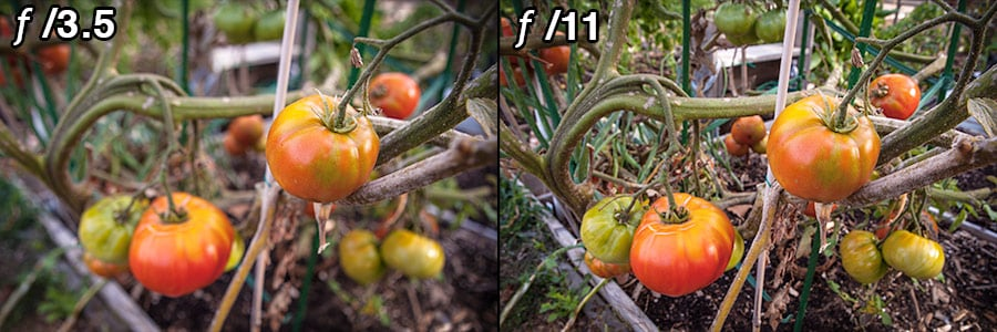 Two images I captured in a community garden, one at f/3.5 and the other at f/11, as I was experimenting with how much depth of field I wanted.