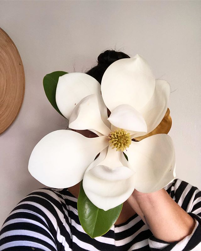 Oh Magnolia, how I love thee. _ She's so elusive and short lived when cut. Bruises at a glance. But her fragrance, so sweet, clean and fresh. Even if you only get a day before it goes completely brown, worth it. Although you'd probably have to cut it yourself, you see they bruise immediately, so they're are not sold anywhere.  _ #rawfinery #magnoliaflower