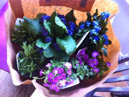 And here are my purchases. All blue and mauve plants - my favourite coloured flowers.