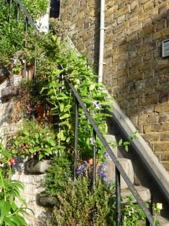 I have placed theherbson the lower steps (three varieties of mint, sage, rosemary and thyme) and flowering plants on the upper steps.
