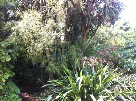 New Zealand native trees including a Kowhai