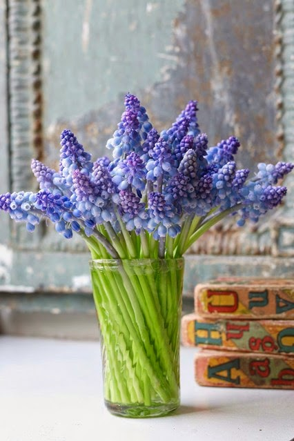 I love the simplicity of this jar of blue Muscari.I am a huge fan of blue flowers.