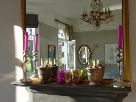 Crocus plants on the mantelpiece