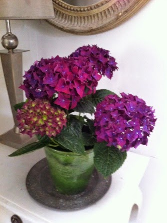 Look at the colour of this hydrangea. Isn't it incredible?!