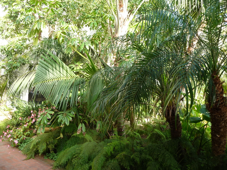 The lush gardens in the hotel grounds