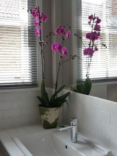 flowersinside (6).jpeg