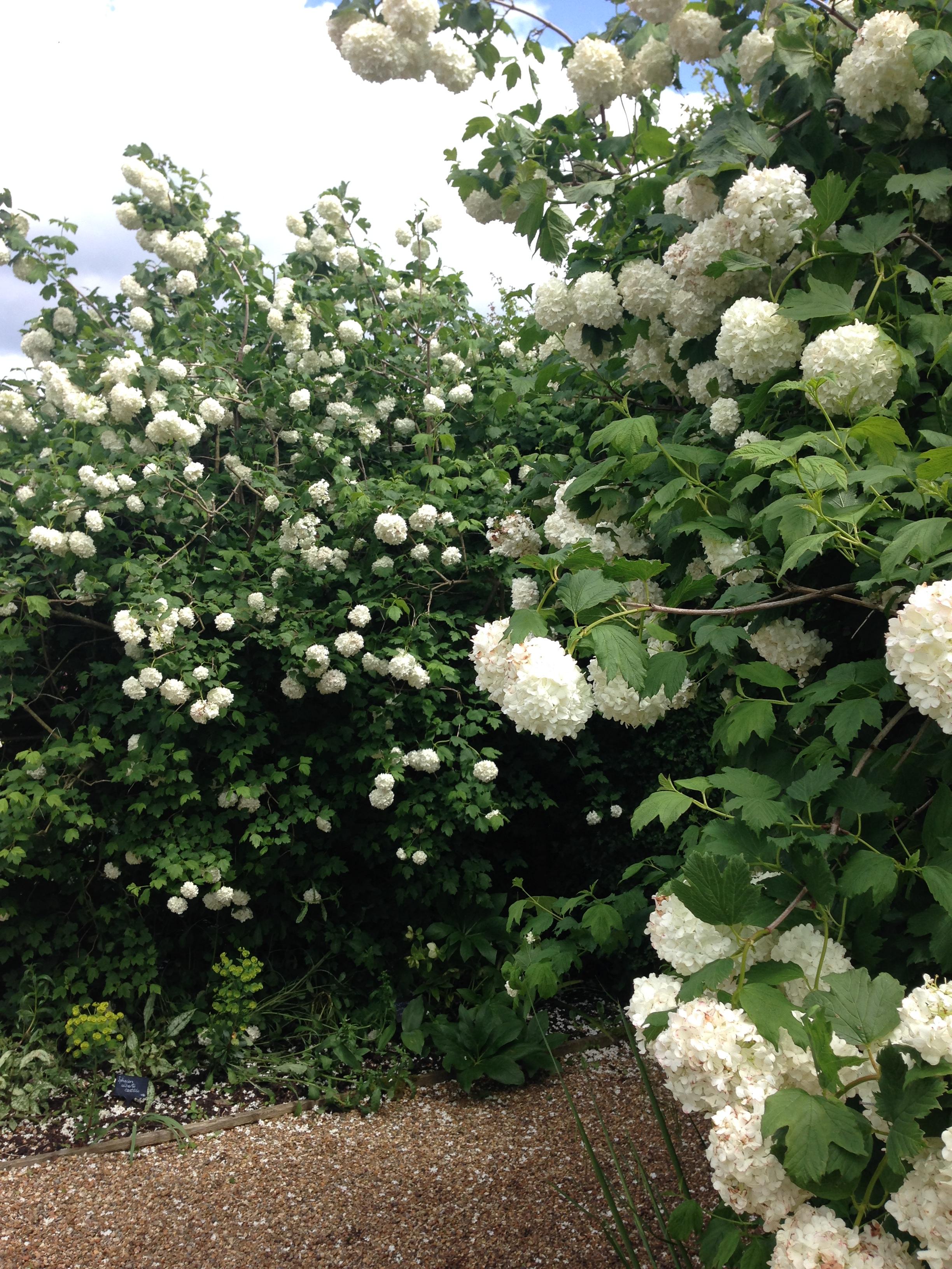 FlowerGarden (4).JPG