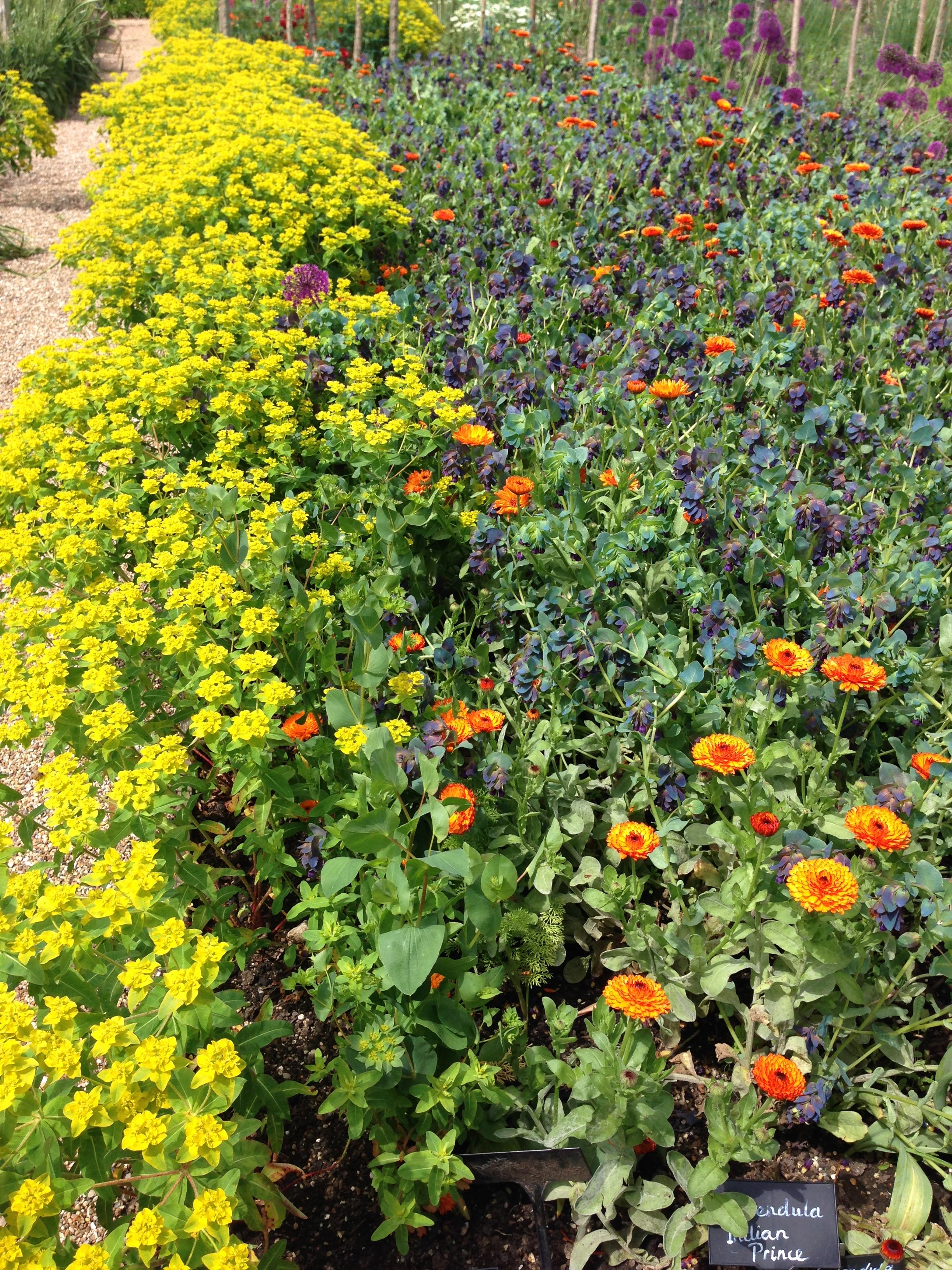 FlowerGarden (3).JPG
