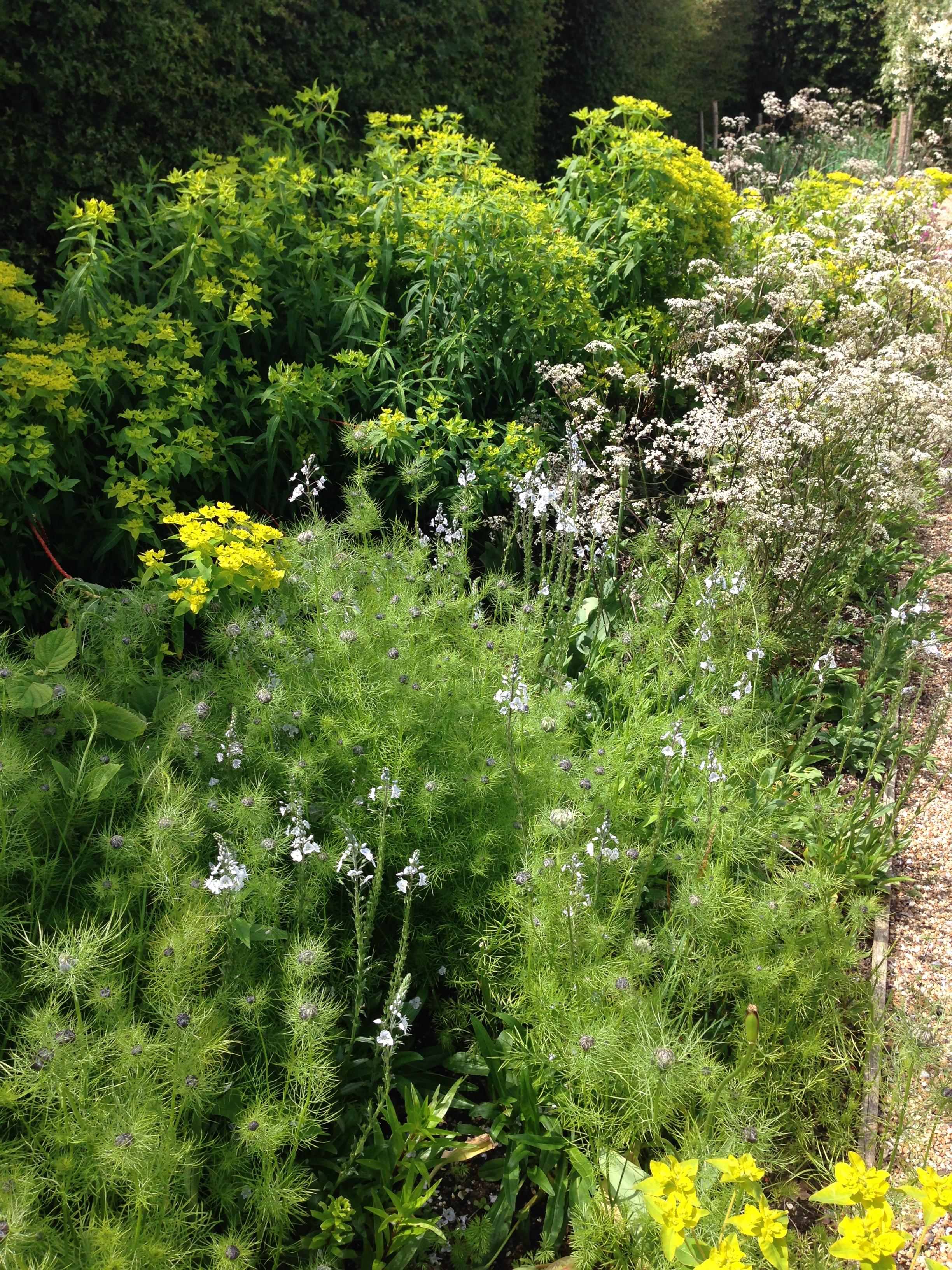 FlowerGarden (6).JPG