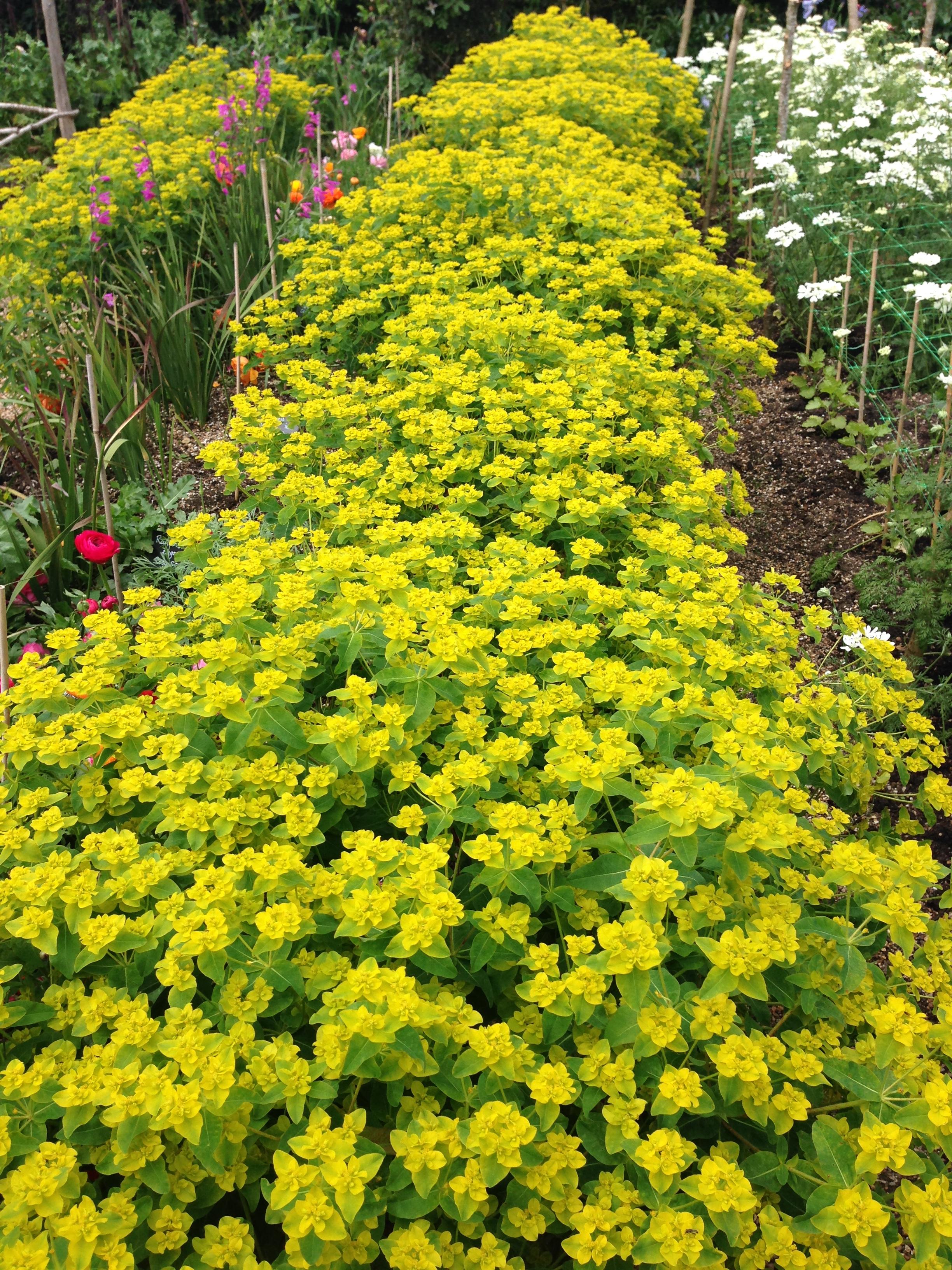 FlowerGarden (10).JPG