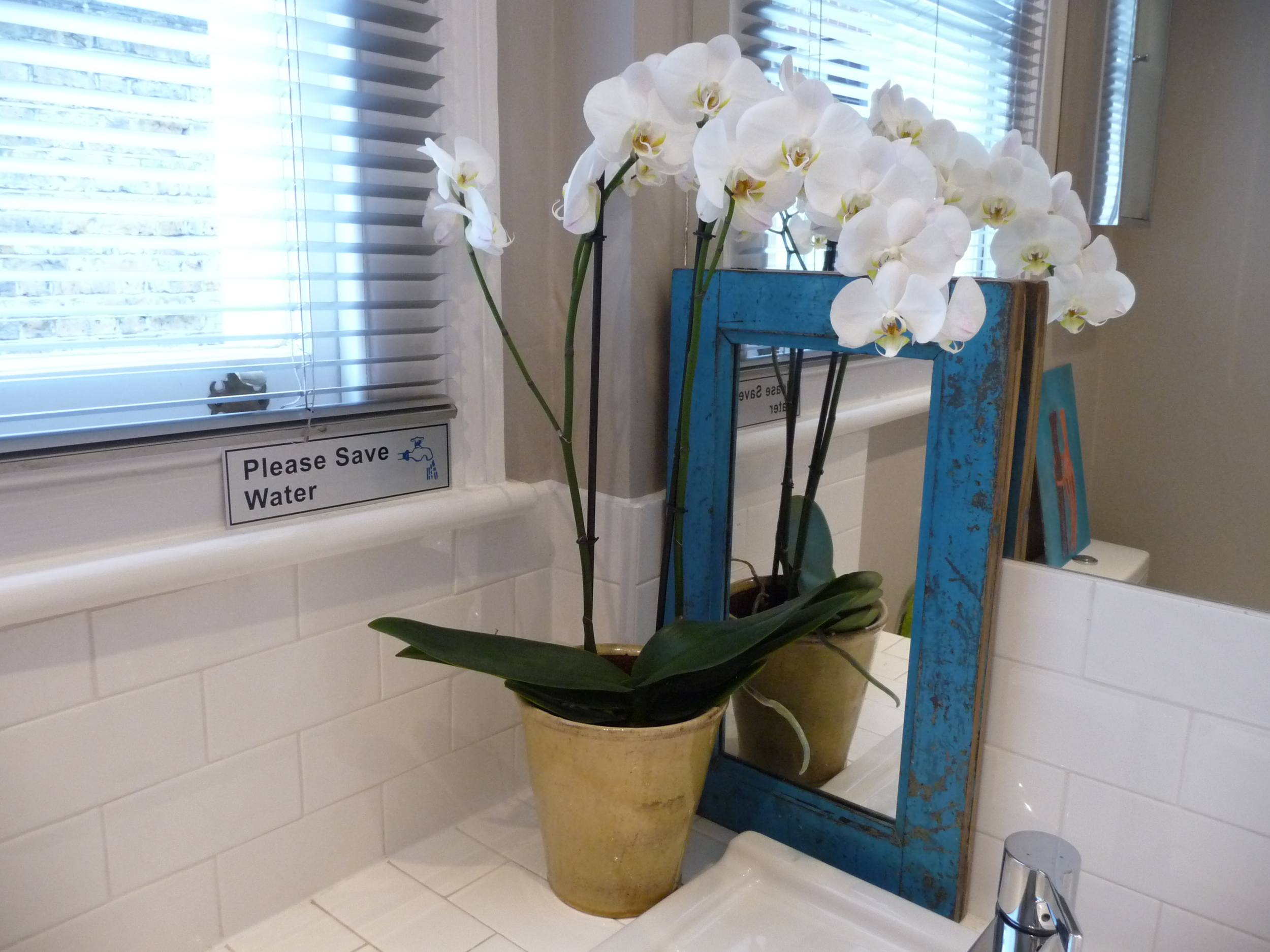 My staple in the bathroom is always the orchid plant as they last for months and months and require little or no water (there is no soil in the pot). I never feed them either.  This one is four months old!!