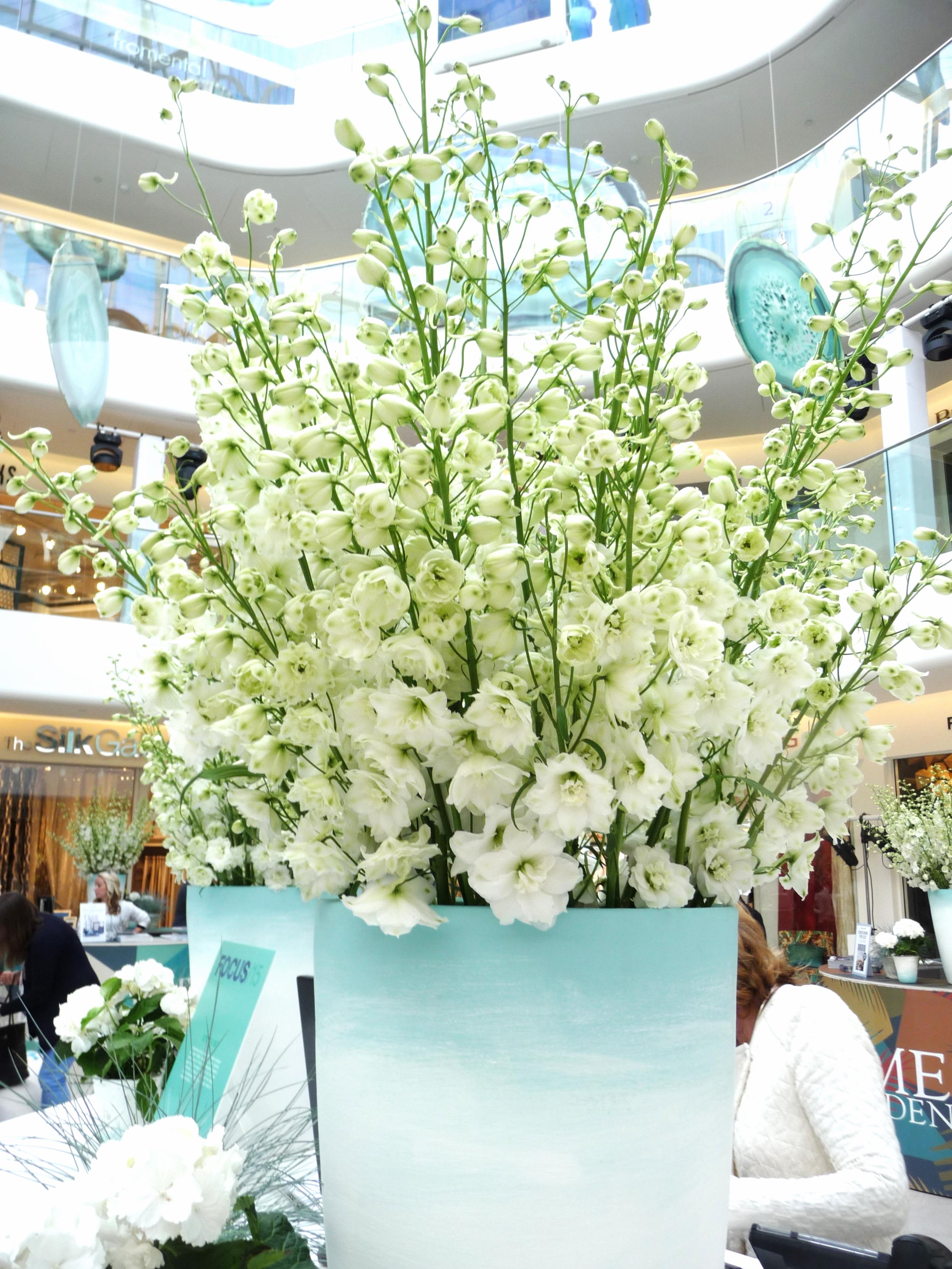 Stunning white delphiniums