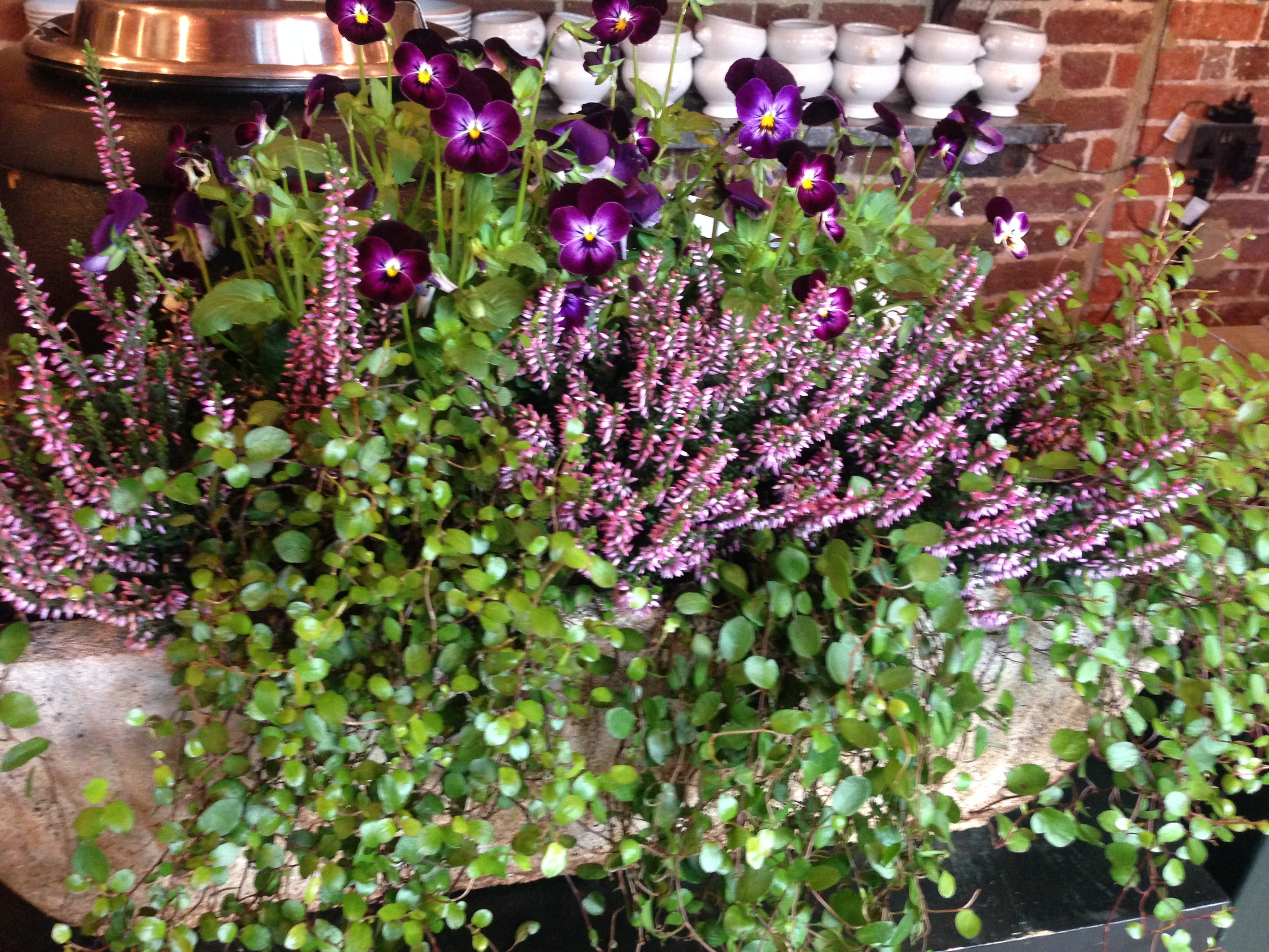 Trough of plants on the counter in the cafe. Did you notice the lovely white French soup bowls on the shelf behind?