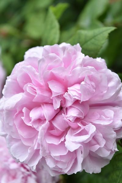m_Flowers (5).jpg