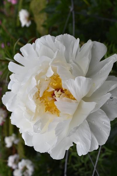 m_Flowers (10).jpg