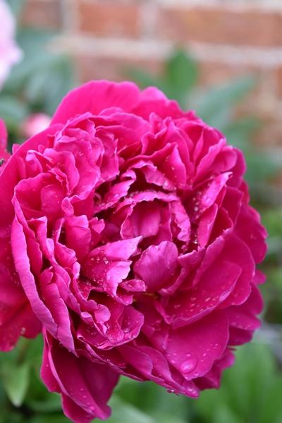 m_Flowers (13).jpg