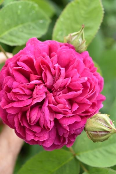 m_Flowers (17).jpg