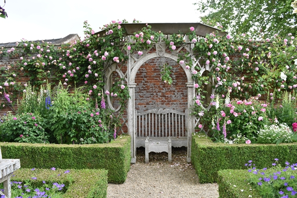 Constance Spry rose over the gazebo