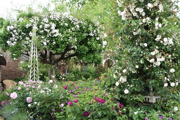 m_Rose Garden (20).jpg