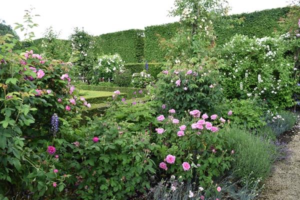 m_Rose Garden (22).jpg