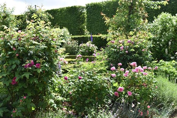 m_Rose Garden (39).jpg