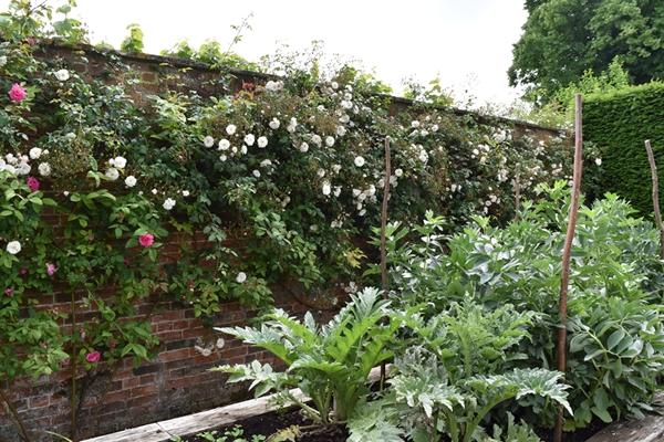 m_Veg Garden (2).jpg