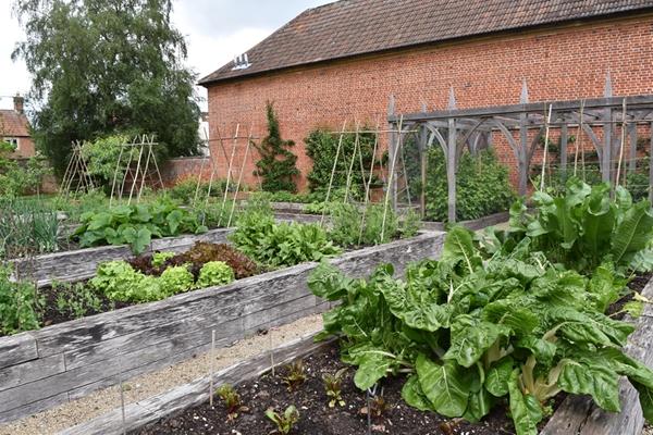 m_Veg Garden (4).jpg